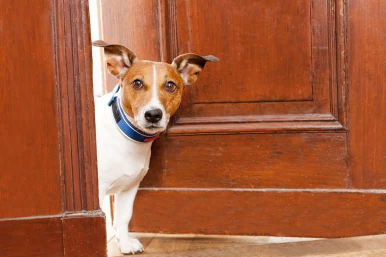dog-guarding-house-from-burglary