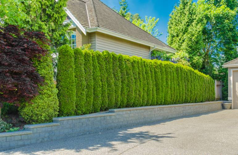 garden-house-security-burglar