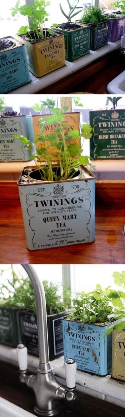 Tea tin planters