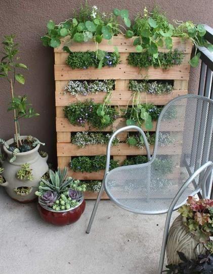 Vertical garden pallet wall