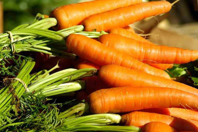 carrots-vegetable-garden