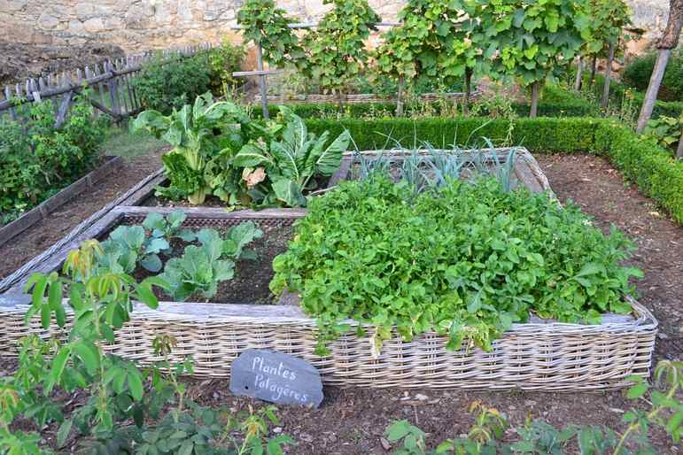 vegetable-plot