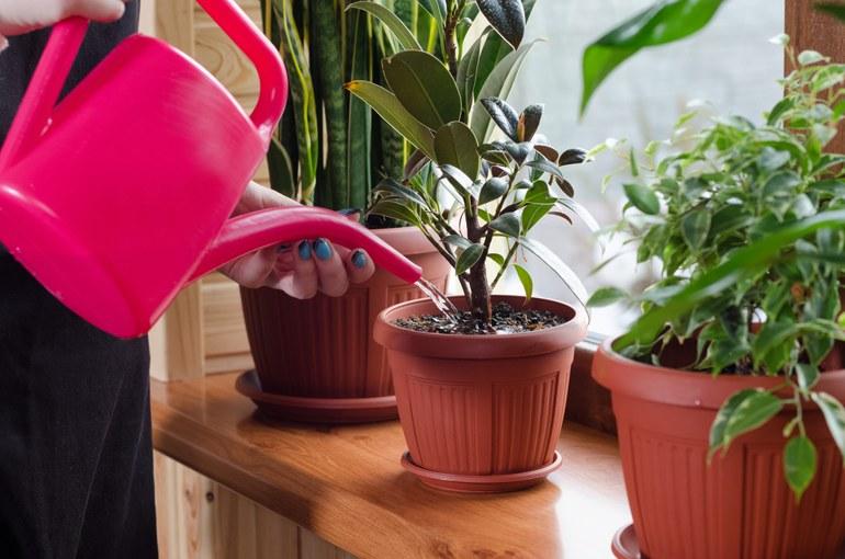 household-plants