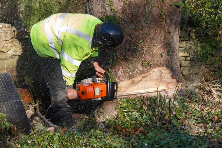 guide-to-subsidence-cut-tree