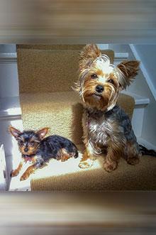 Lily & Roxy